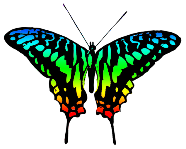 multicolored-butterfly-clipart